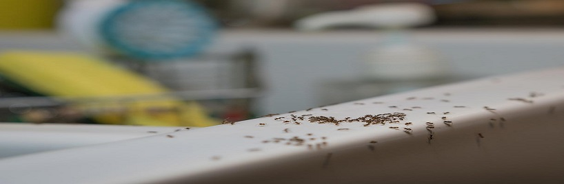 Our Tips For A Bug Free Household