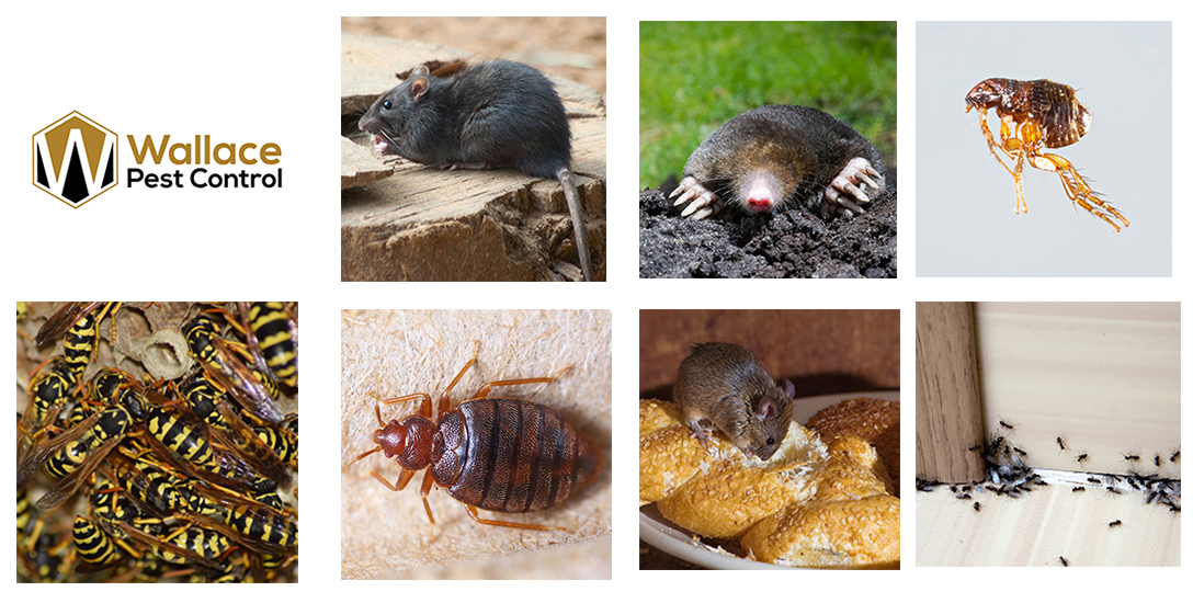 Pest Control Services in Burnley