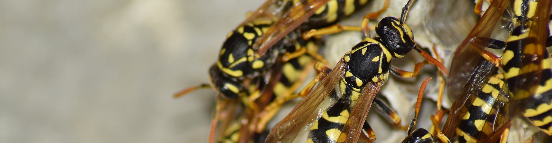 How To Treat A Wasp Sting